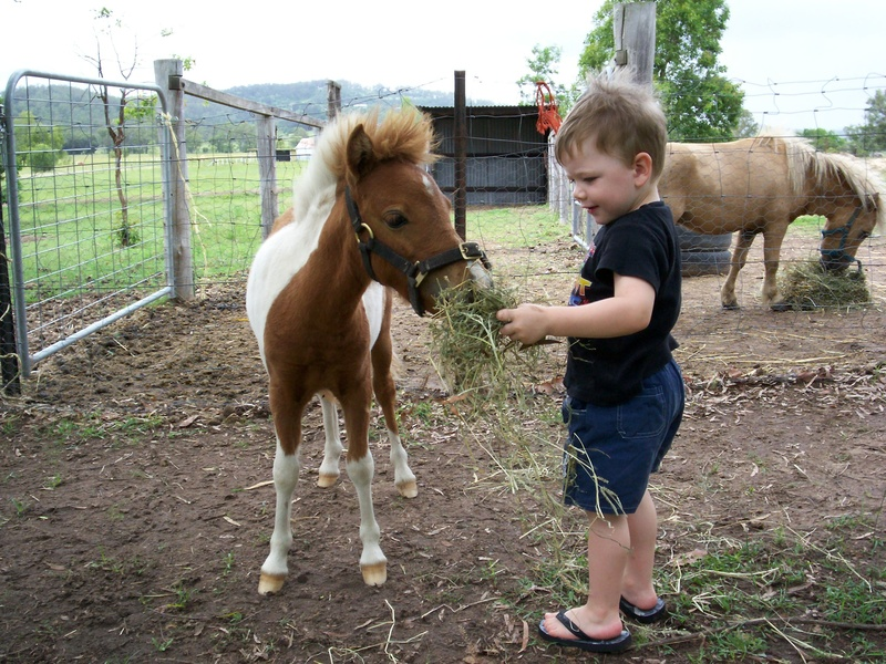 horses and ponies. Horses amp; Ponies is a small